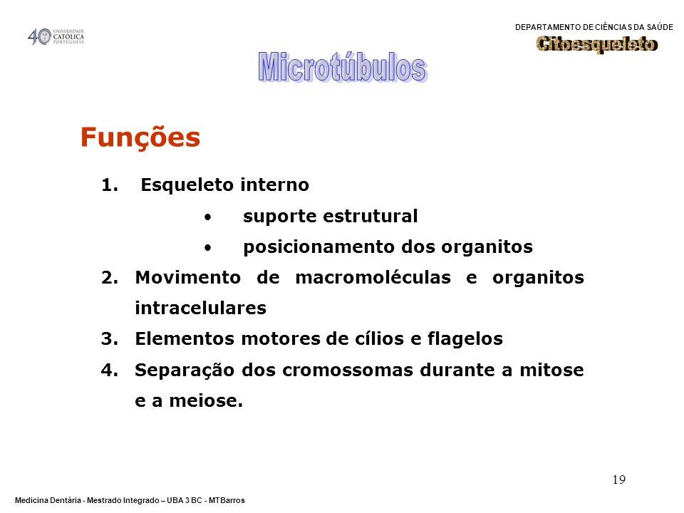 Microtúbulos Funções Citoesqueleto Esqueleto interno