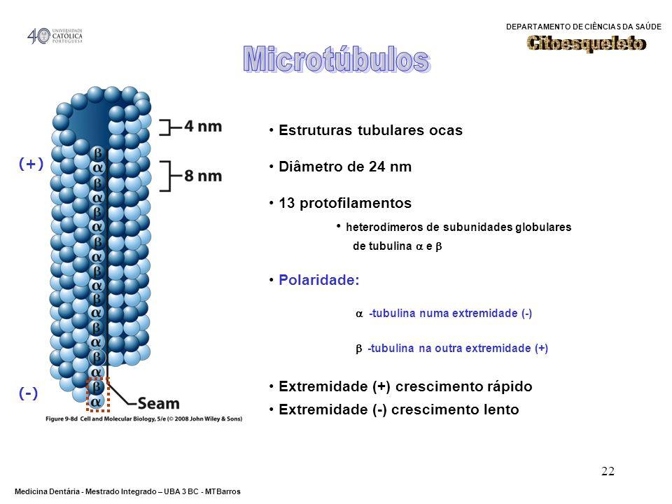 Microtúbulos Citoesqueleto Estruturas tubulares ocas Diâmetro de 24 nm