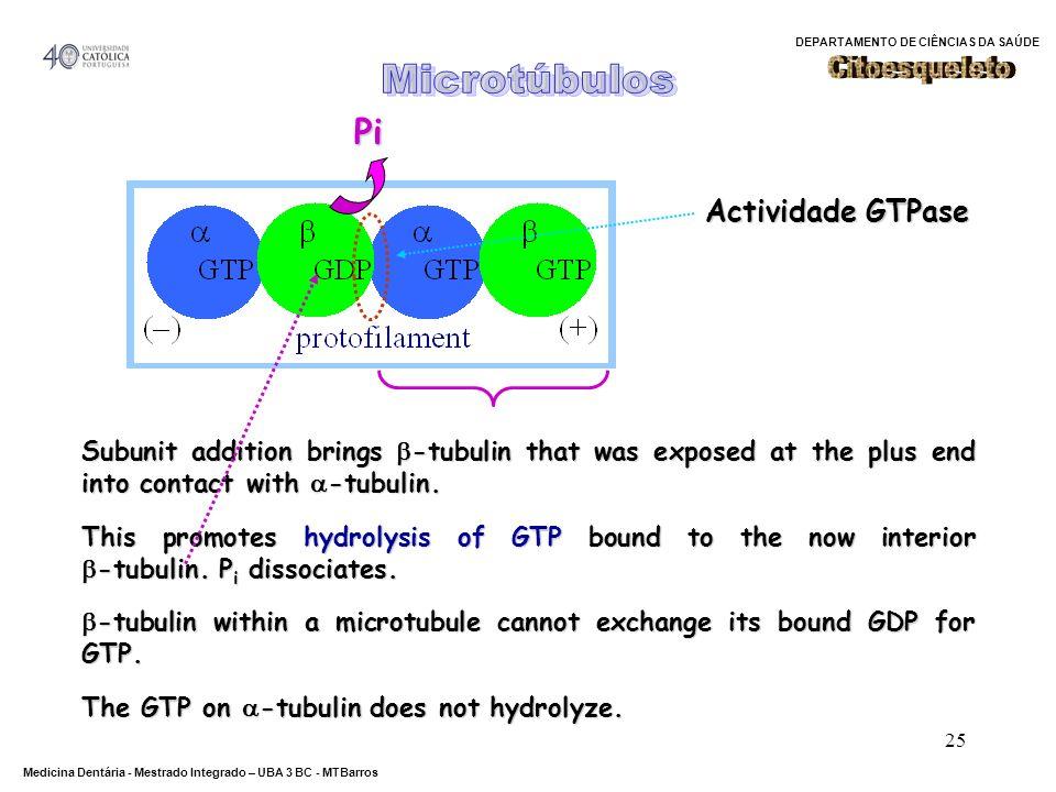 Microtúbulos Citoesqueleto Pi Actividade GTPase