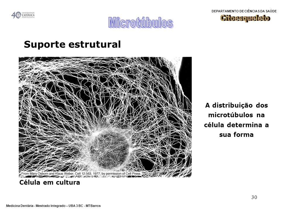 A distribuição dos microtúbulos na célula determina a sua forma