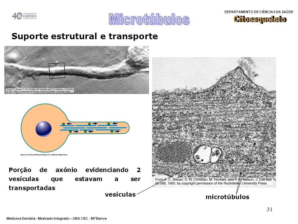 Suporte estrutural e transporte