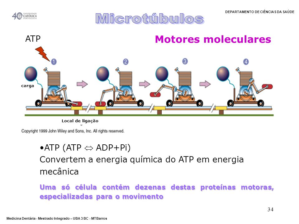 Microtúbulos Motores moleculares ATP ATP (ATP  ADP+Pi)