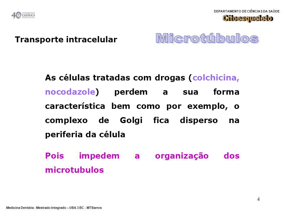 Microtúbulos Citoesqueleto Transporte intracelular
