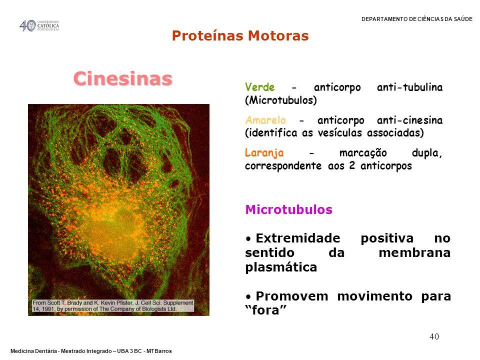 Cinesinas Proteínas Motoras Microtubulos