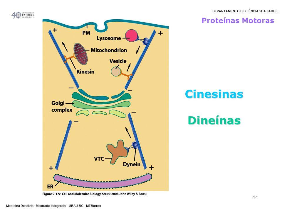 Proteínas Motoras Cinesinas Dineínas