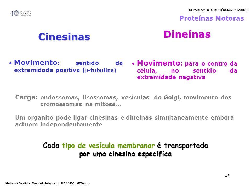 Dineínas Cinesinas Cada tipo de vesícula membranar é transportada