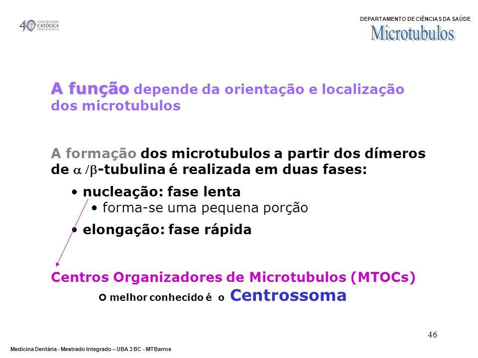 Microtubulos A função depende da orientação e localização dos microtubulos.
