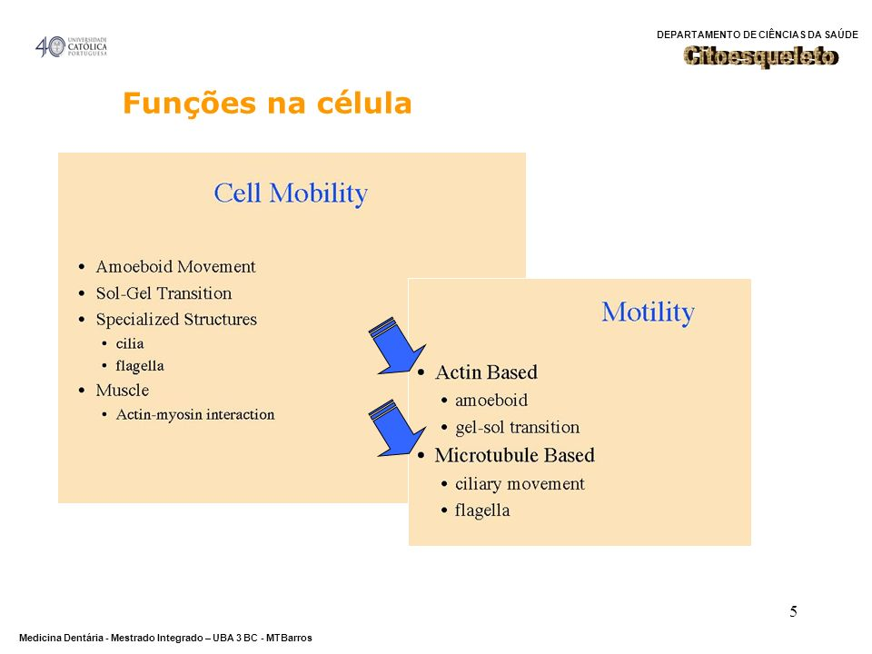 Citoesqueleto Funções na célula