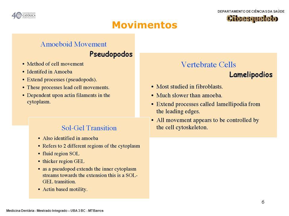 Citoesqueleto Movimentos Pseudopodos Lamelipodios