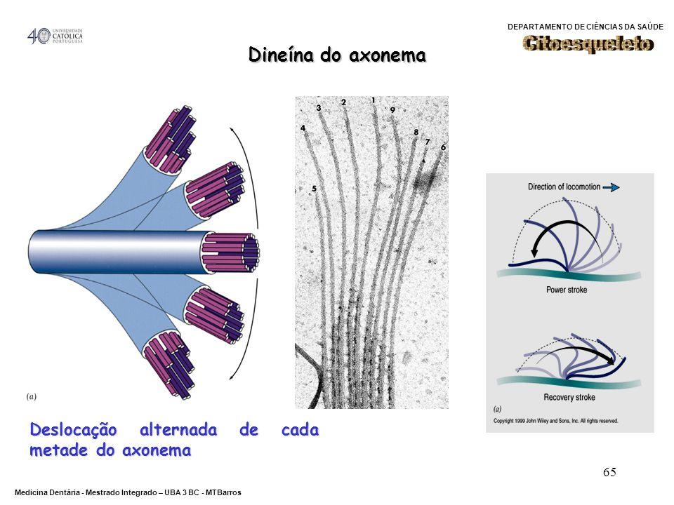 Citoesqueleto Dineína do axonema