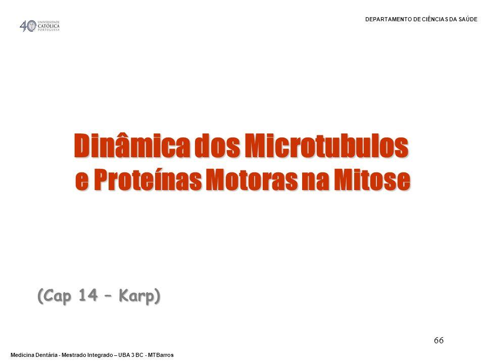 Dinâmica dos Microtubulos e Proteínas Motoras na Mitose