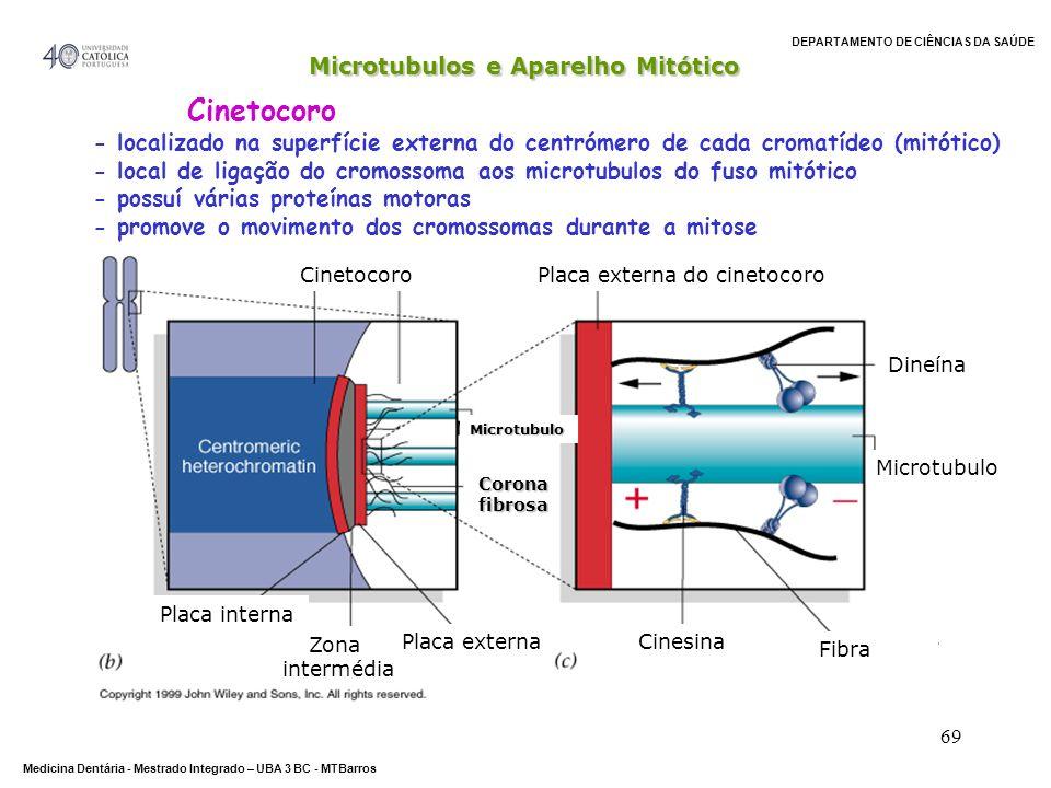Cinetocoro Microtubulos e Aparelho Mitótico