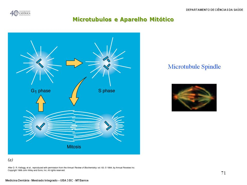 Microtubulos e Aparelho Mitótico