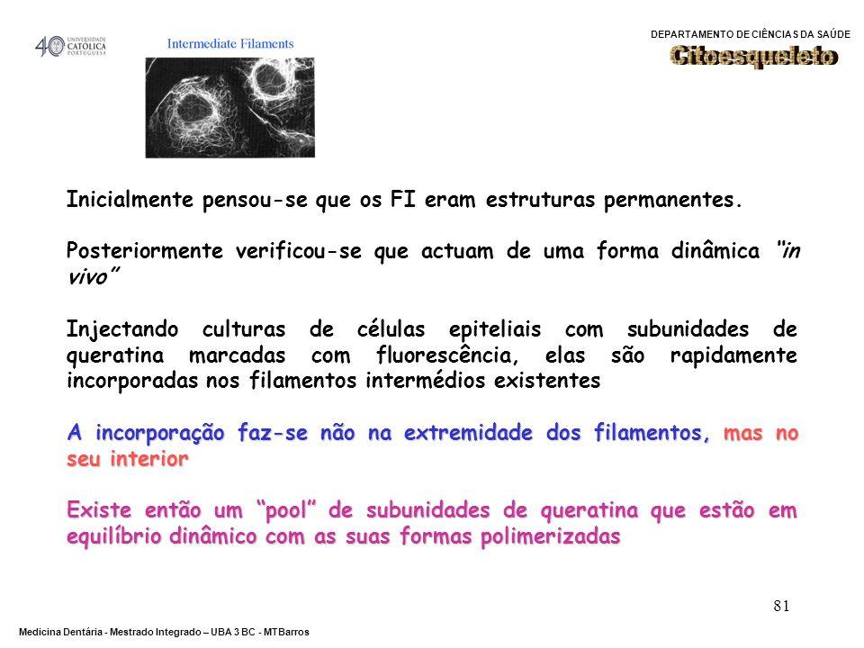 Citoesqueleto Inicialmente pensou-se que os FI eram estruturas permanentes. Posteriormente verificou-se que actuam de uma forma dinâmica in vivo