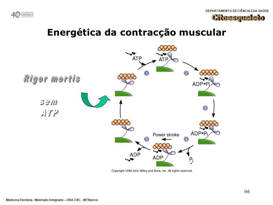 Citoesqueleto Energética da contracção muscular Rigor mortis sem ATP