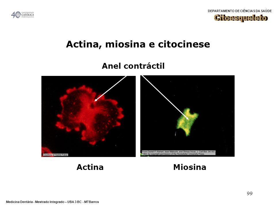 Actina, miosina e citocinese