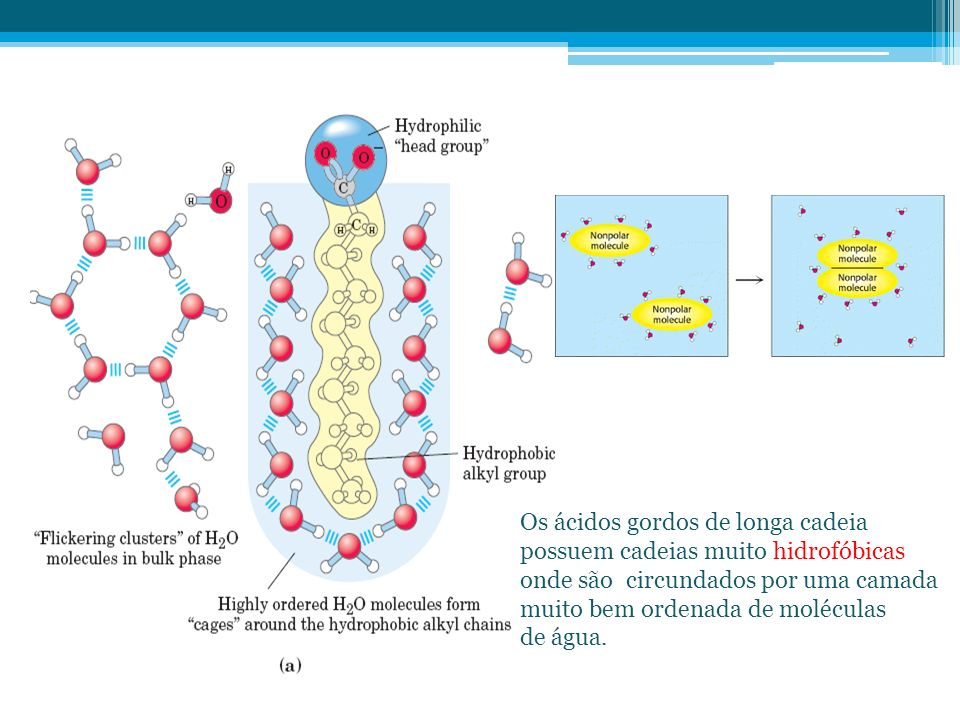 Os ácidos gordos de longa cadeia