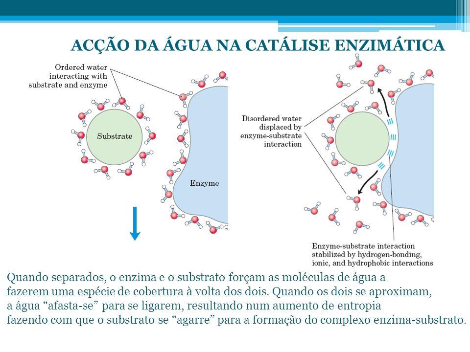 ACÇÃO DA ÁGUA NA CATÁLISE ENZIMÁTICA