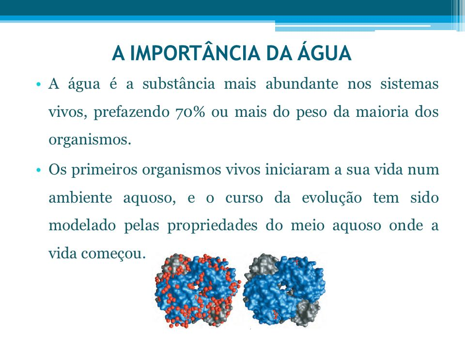 A IMPORTÂNCIA DA ÁGUA A água é a substância mais abundante nos sistemas vivos, prefazendo 70% ou mais do peso da maioria dos organismos.