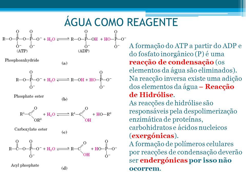 ÁGUA COMO REAGENTE A formação do ATP a partir do ADP e do fosfato inorgânico (P) é uma reacção de condensação (os elementos da água são eliminados).
