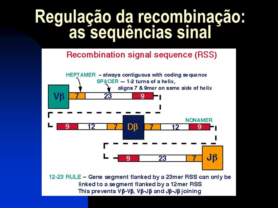 Regulação da recombinação: as sequências sinal