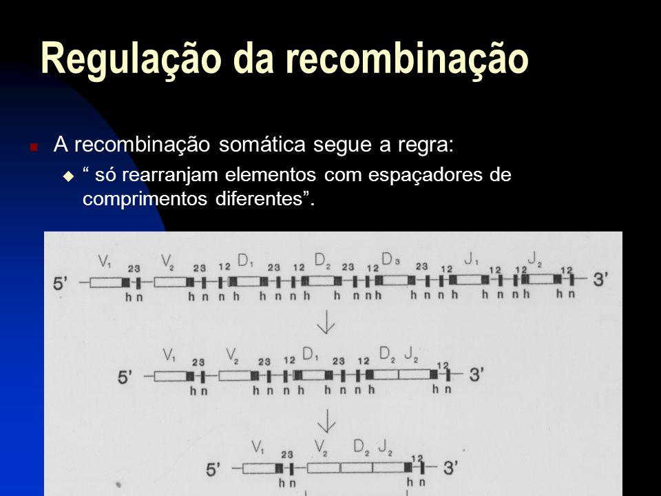 Regulação da recombinação