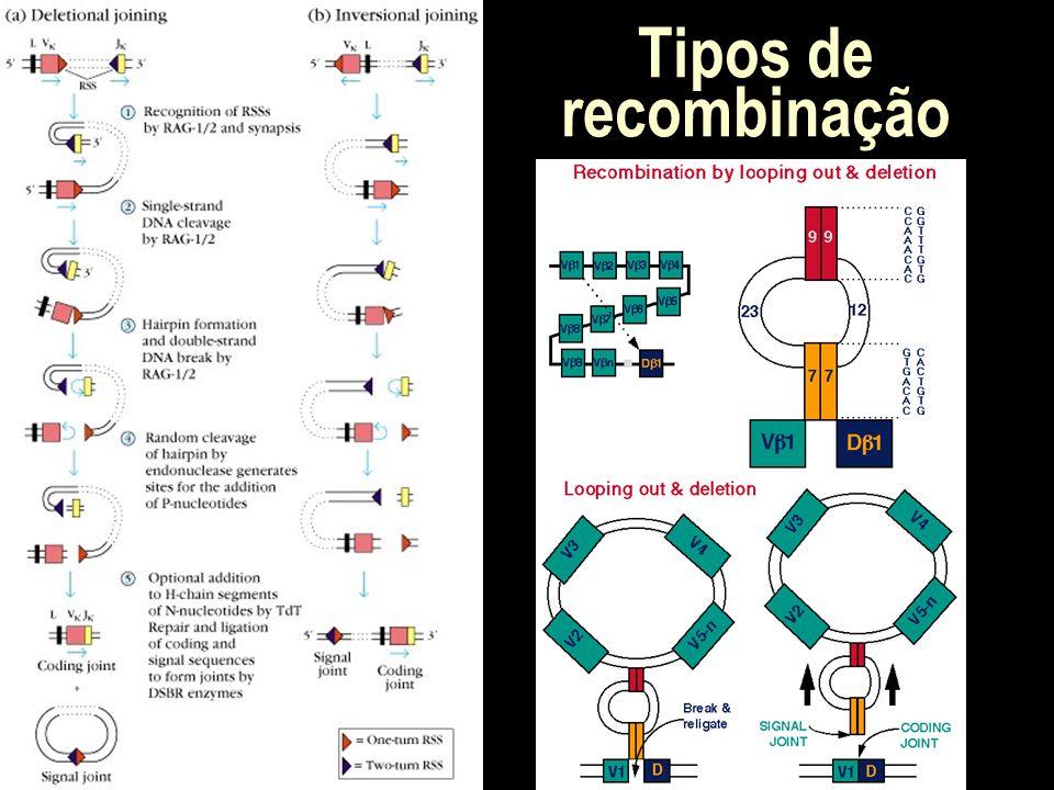 Tipos de recombinação
