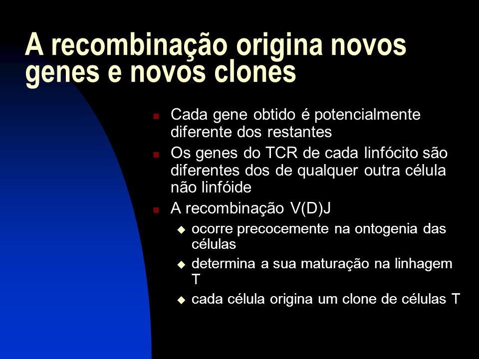 A recombinação origina novos genes e novos clones