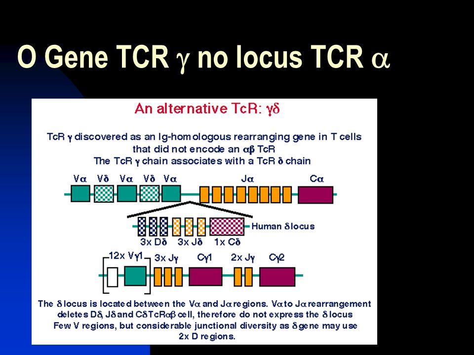 O Gene TCR g no locus TCR a
