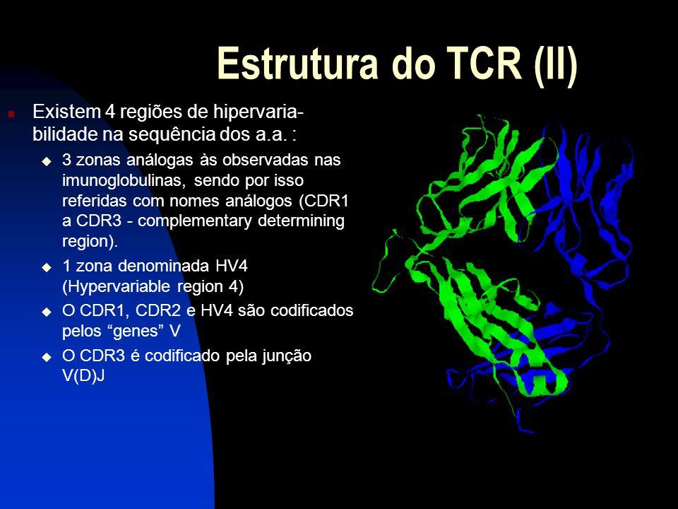 Estrutura do TCR (II) 2. Existem 4 regiões de hipervaria-bilidade na sequência dos a.a. :