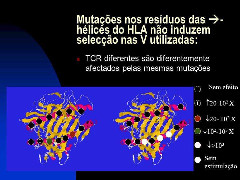 Mutações nos resíduos das -hélices do HLA não induzem selecção nas V utilizadas: