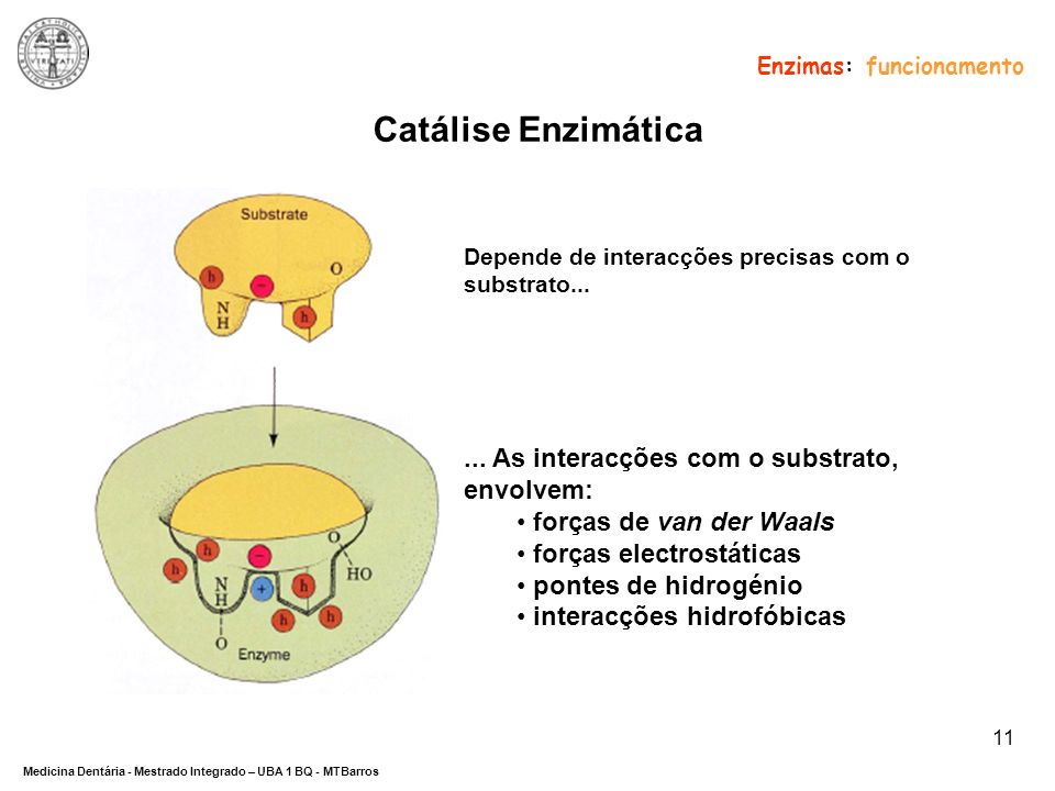 Catálise Enzimática ... As interacções com o substrato, envolvem: