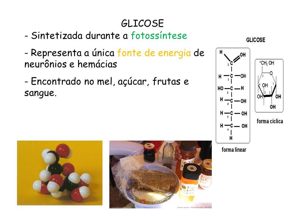 GLICOSE Sintetizada durante a fotossíntese. Representa a única fonte de energia de neurônios e hemácias.