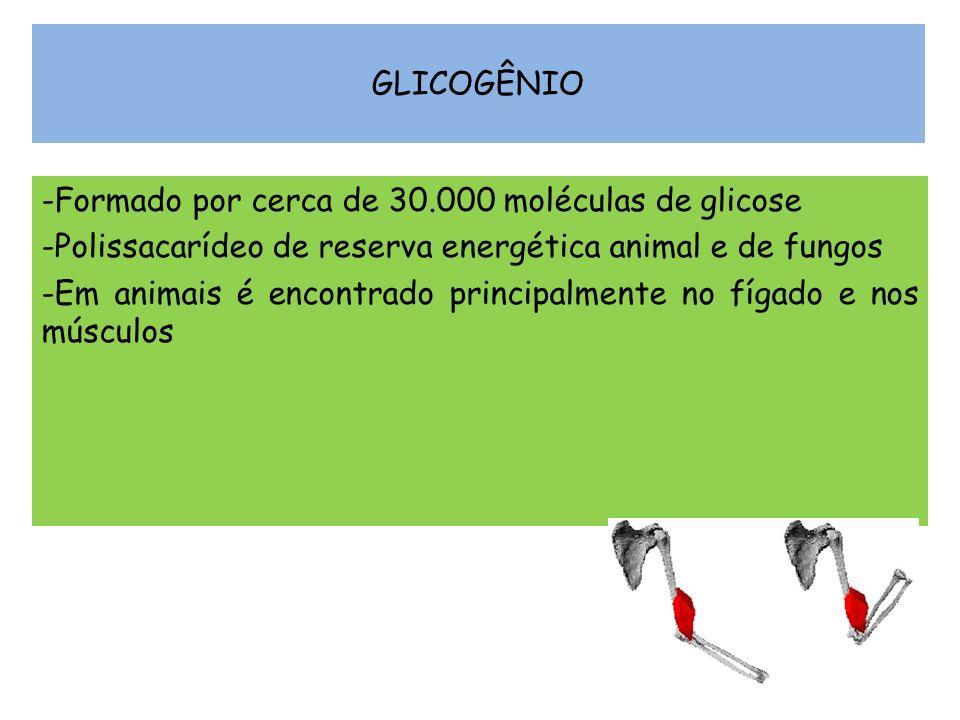 GLICOGÊNIO Formado por cerca de 30.000 moléculas de glicose. Polissacarídeo de reserva energética animal e de fungos.
