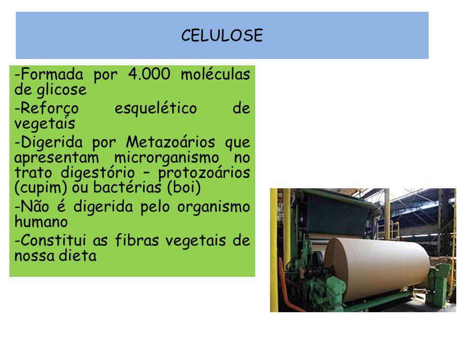 CELULOSE Formada por 4.000 moléculas de glicose. Reforço esquelético de vegetais.
