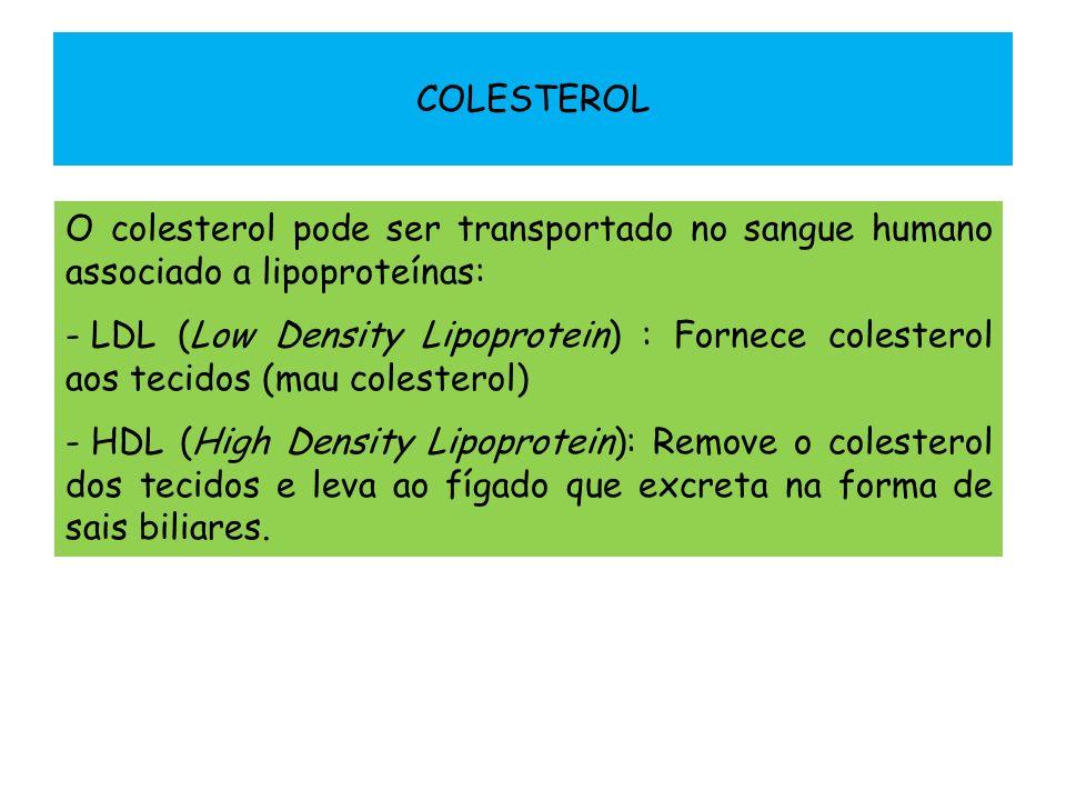 COLESTEROL O colesterol pode ser transportado no sangue humano associado a lipoproteínas: