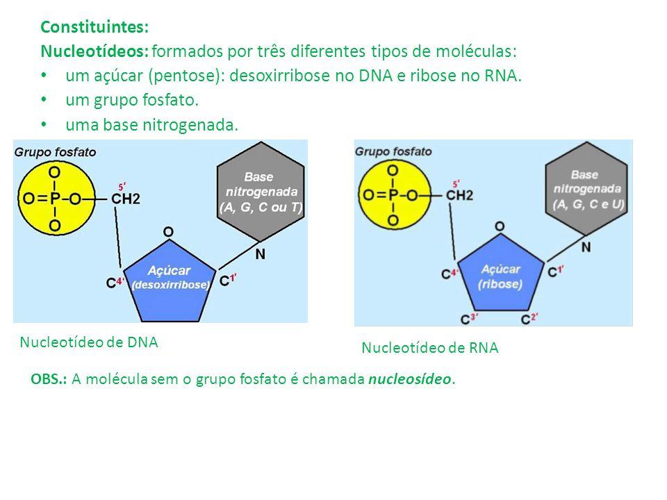 Nucleotídeos: formados por três diferentes tipos de moléculas: