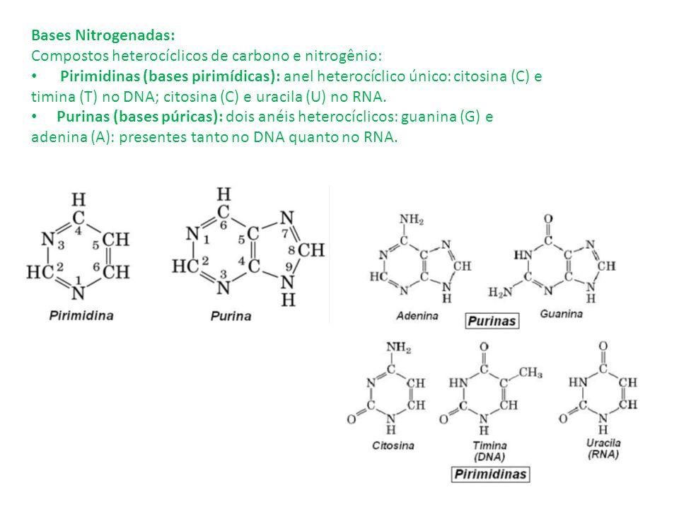 Bases Nitrogenadas: Compostos heterocíclicos de carbono e nitrogênio: Pirimidinas (bases pirimídicas): anel heterocíclico único: citosina (C) e.