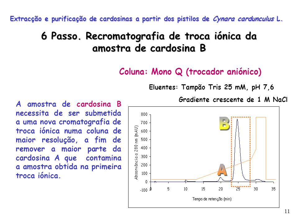 6 Passo. Recromatografia de troca iónica da amostra de cardosina B