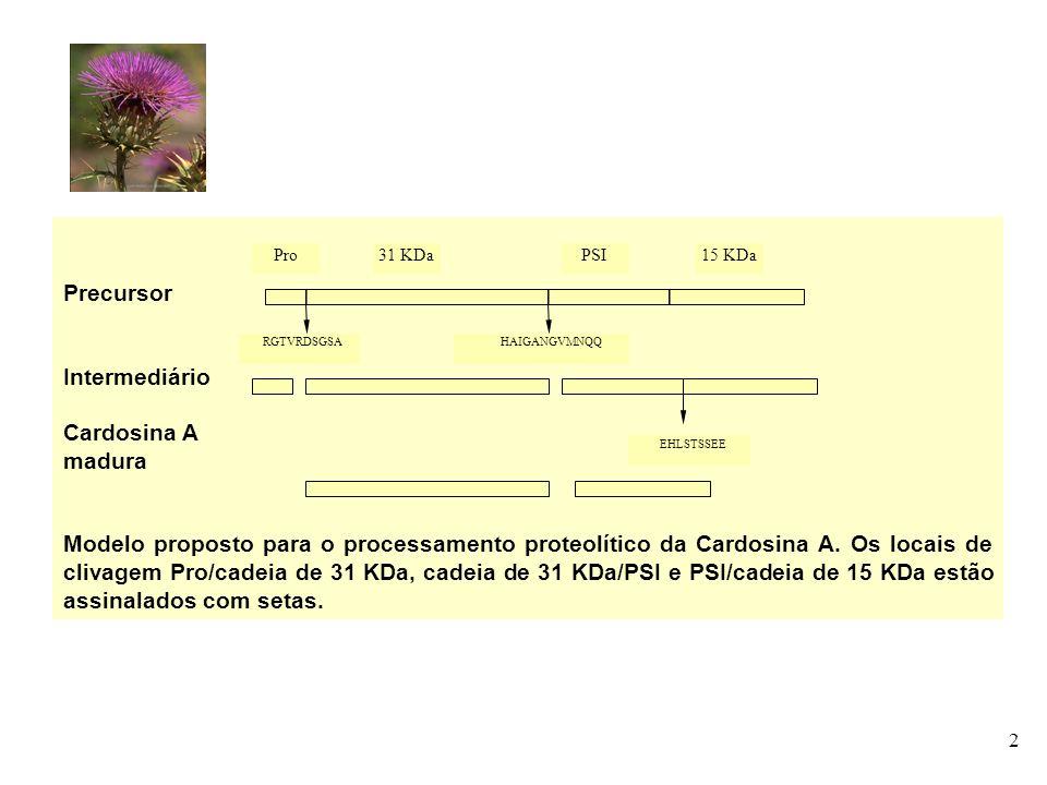 Precursor Intermediário Cardosina A madura