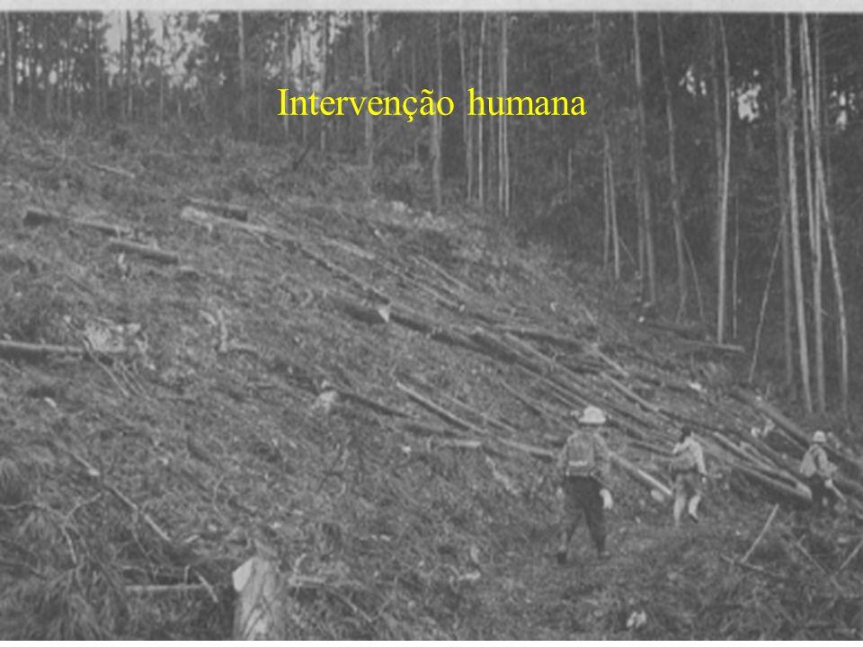 Intervenção humana