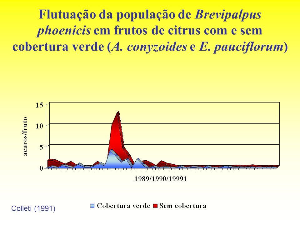 Flutuação da população de Brevipalpus phoenicis em frutos de citrus com e sem cobertura verde (A. conyzoides e E. pauciflorum)
