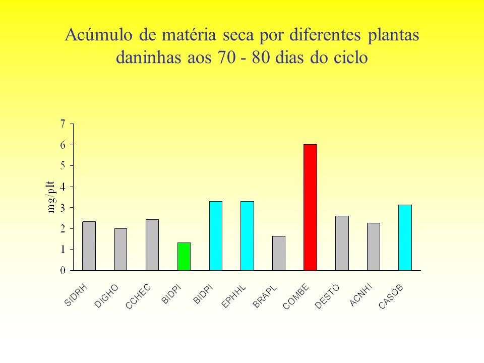 Acúmulo de matéria seca por diferentes plantas daninhas aos 70 - 80 dias do ciclo