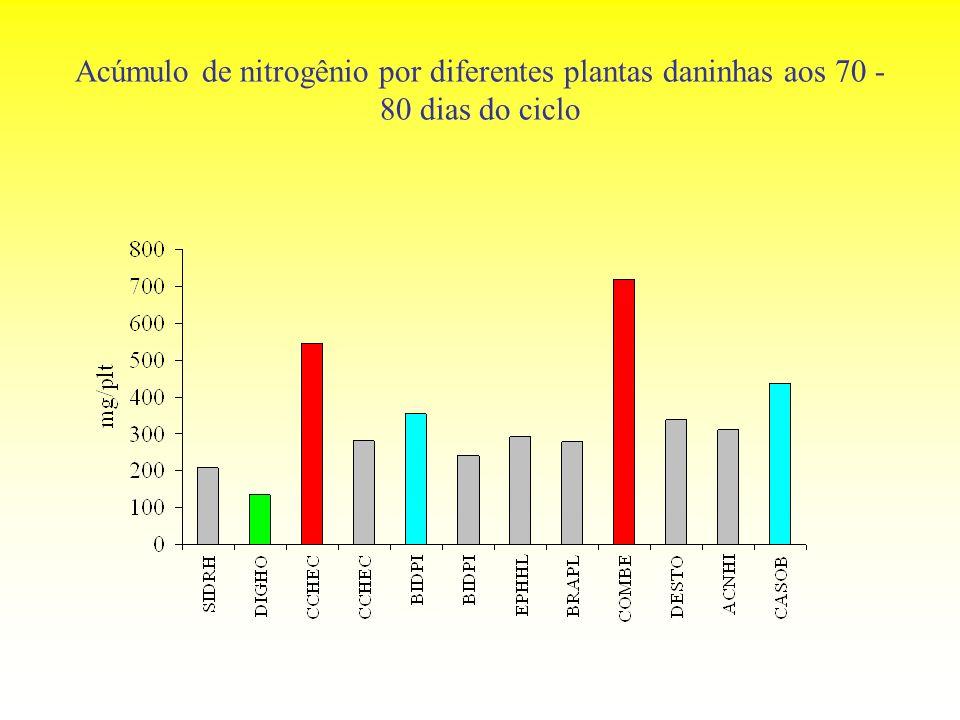 Acúmulo de nitrogênio por diferentes plantas daninhas aos 70 - 80 dias do ciclo