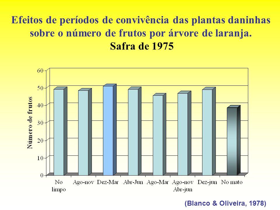 Efeitos de períodos de convivência das plantas daninhas sobre o número de frutos por árvore de laranja. Safra de 1975