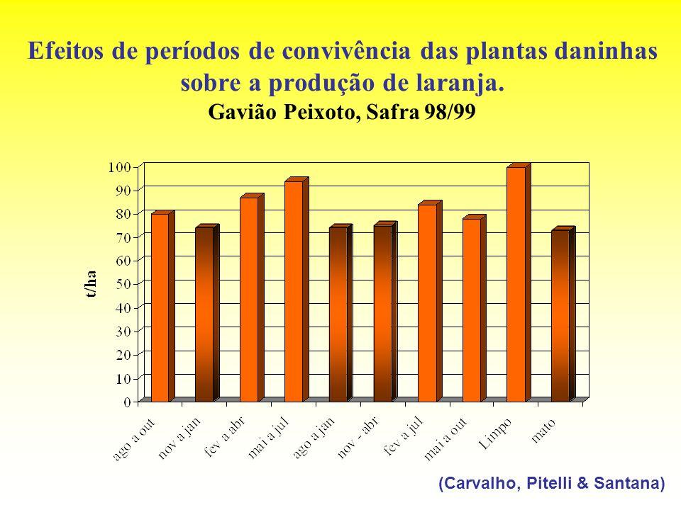 Efeitos de períodos de convivência das plantas daninhas sobre a produção de laranja. Gavião Peixoto, Safra 98/99