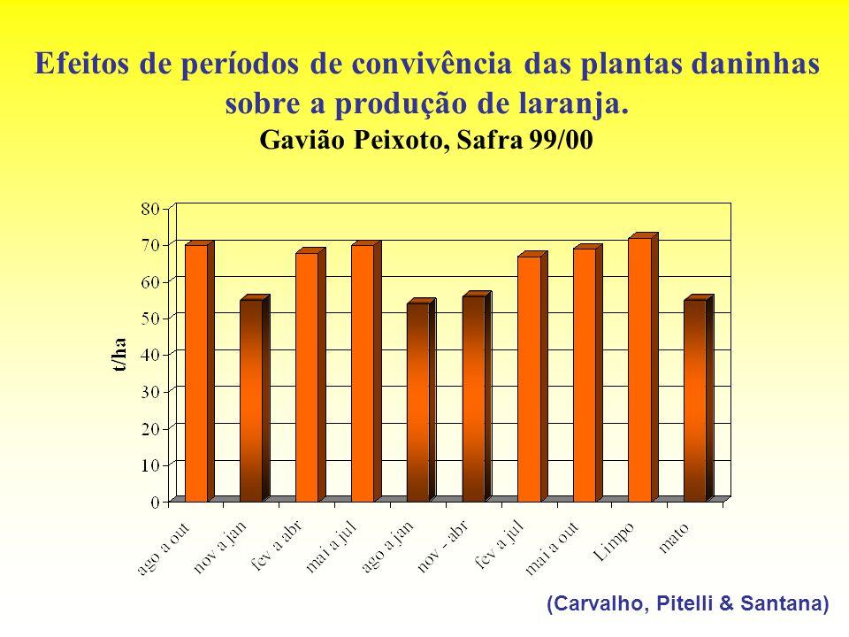Efeitos de períodos de convivência das plantas daninhas sobre a produção de laranja. Gavião Peixoto, Safra 99/00
