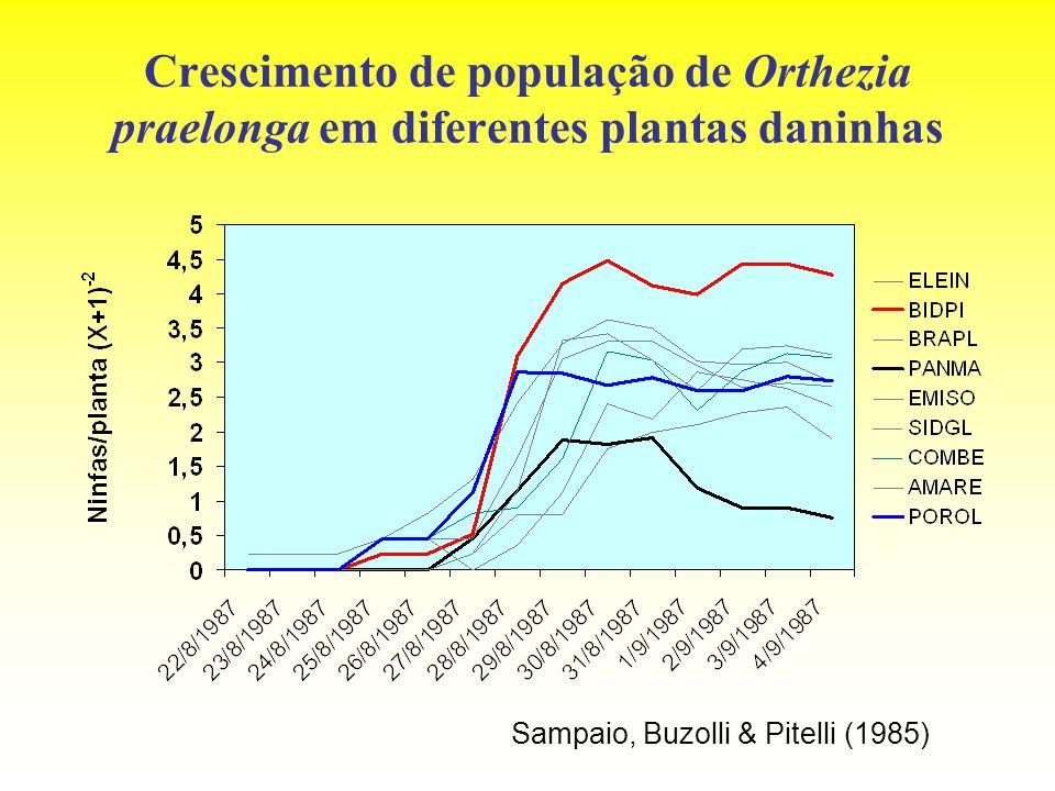Crescimento de população de Orthezia praelonga em diferentes plantas daninhas