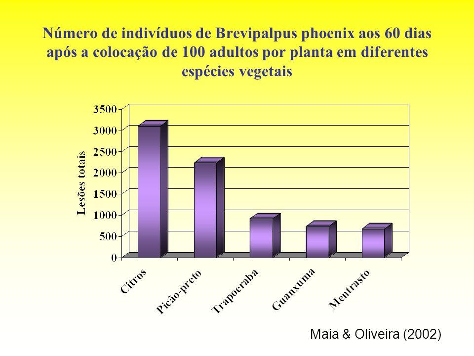 Número de indivíduos de Brevipalpus phoenix aos 60 dias após a colocação de 100 adultos por planta em diferentes espécies vegetais