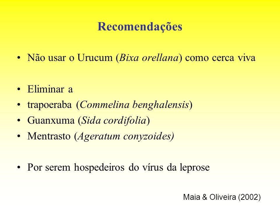 Recomendações Não usar o Urucum (Bixa orellana) como cerca viva